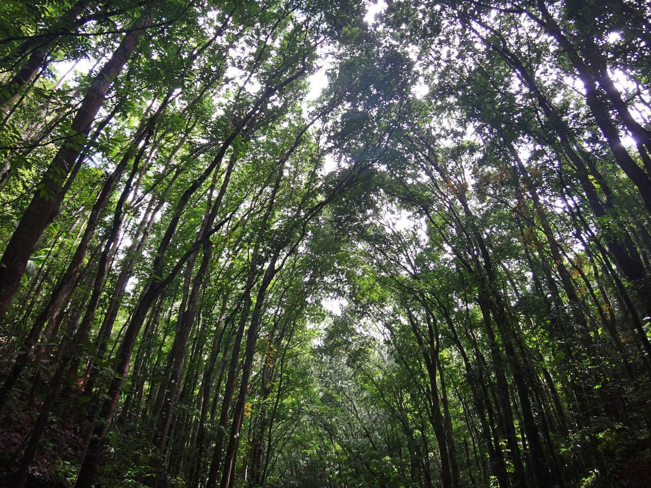Manmade forest Trees And Nature Forest Photography Forest Nature Photography Nature Naturelover