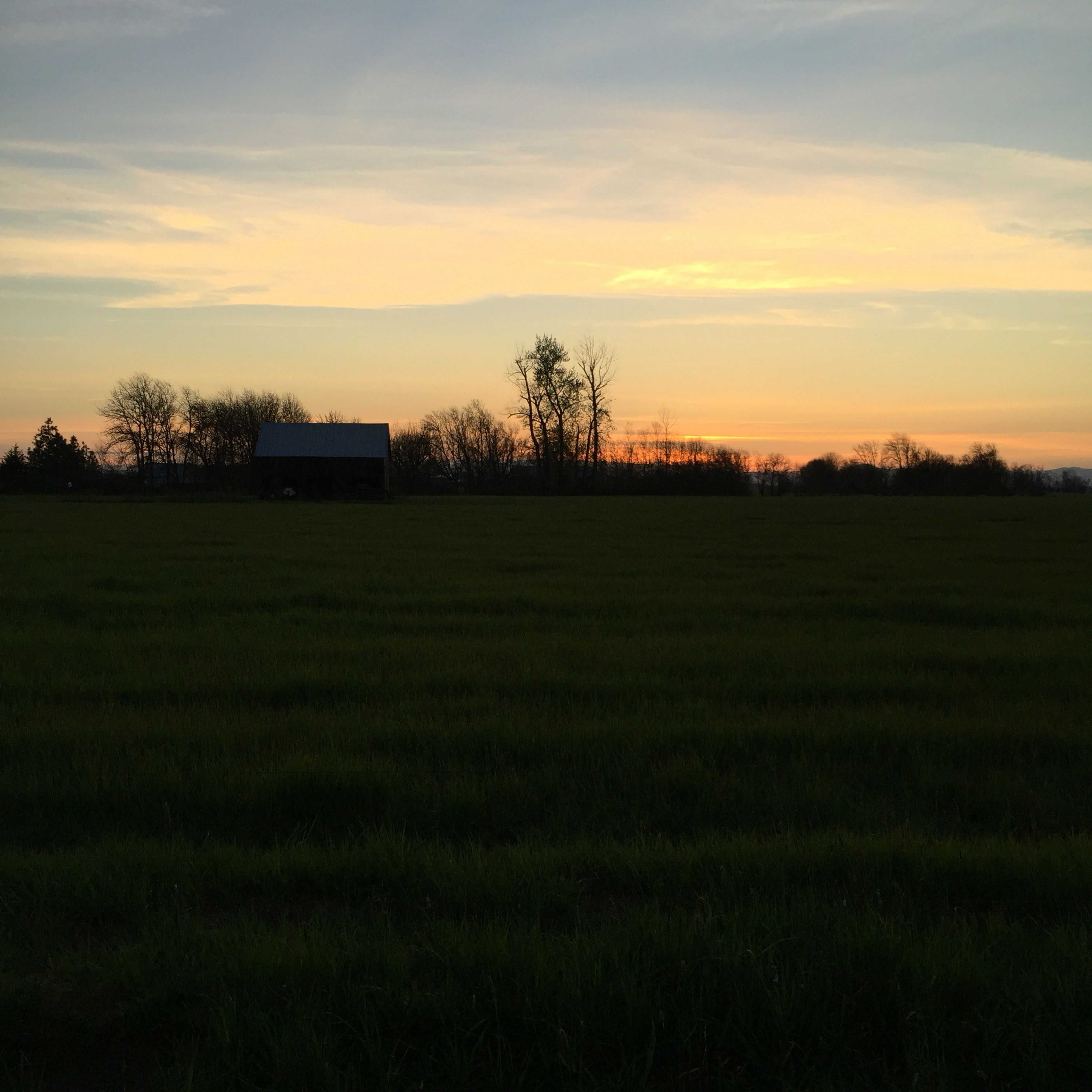 sunset, field, sky, grass, landscape, built structure, tree, building exterior, architecture, tranquility, tranquil scene, scenics, beauty in nature, nature, grassy, cloud - sky, silhouette, rural scene, house, growth