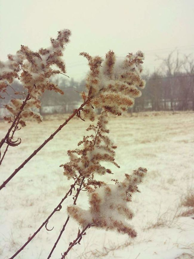 Weeds Are Beautiful Too Snow Smithsburg Maryland Maryland
