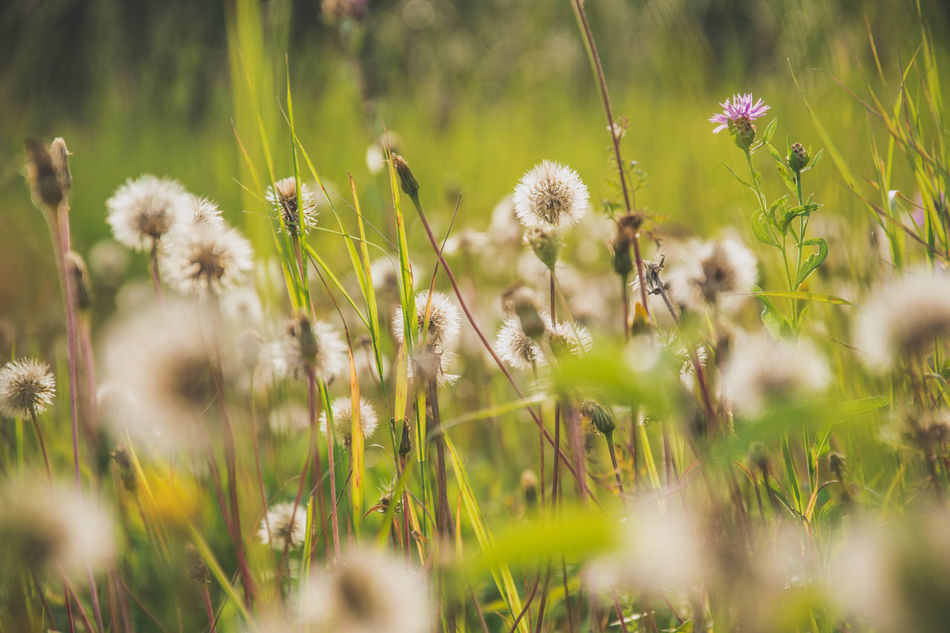 Beautiful stock photos of weed,  Beauty In Nature,  Blossom,  Botany,  Close-up