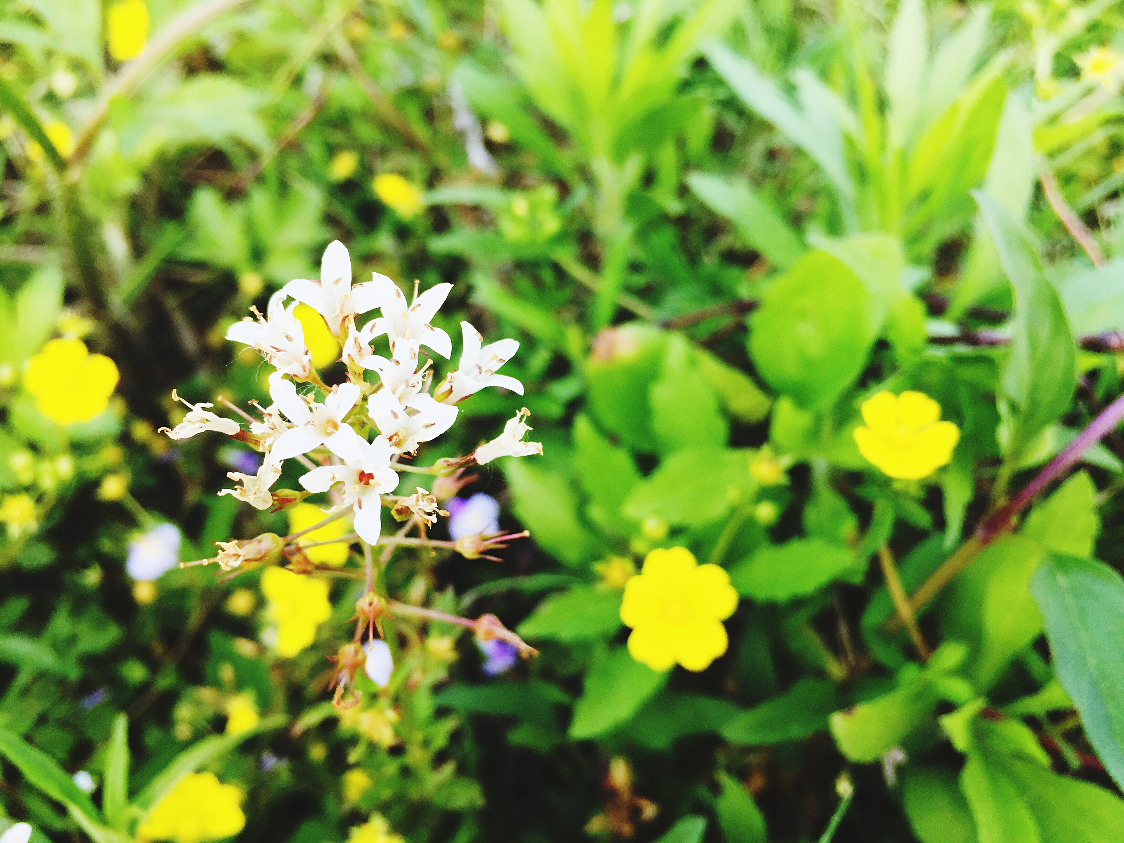flower, freshness, growth, petal, fragility, yellow, beauty in nature, flower head, leaf, blooming, plant, nature, white color, focus on foreground, close-up, green color, in bloom, blossom, day, outdoors