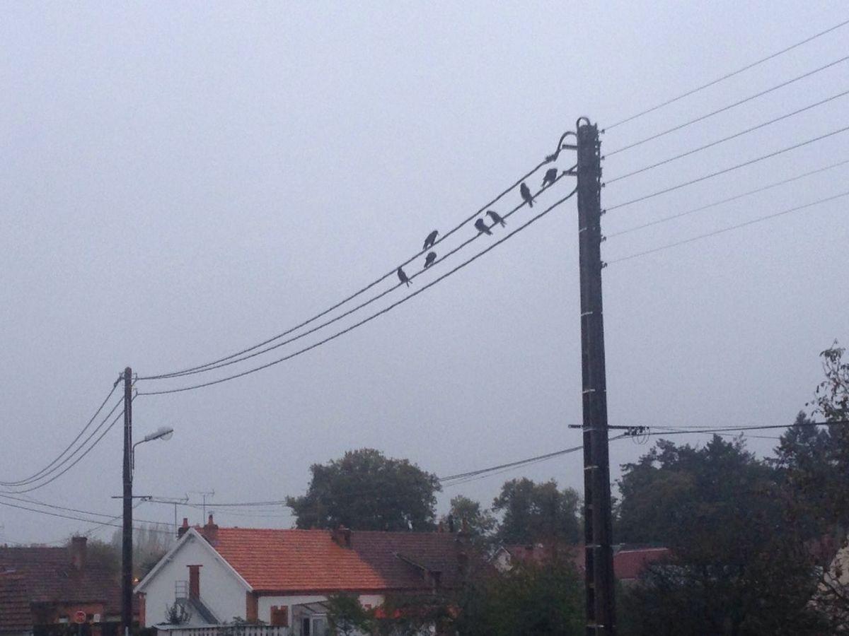 Hooo une partition d'oiseaux! Les Oiseaux