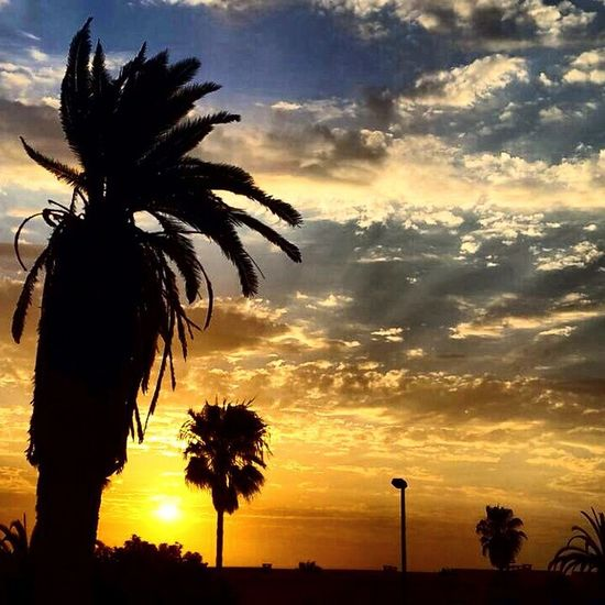 Sunset Swakopmund Swakop_mag Nature namibia ig_sea ig_shotz ig_sunset igers potd picoftheday palmtree instatag The Great Outdoors - 2015 EyeEm Awards The Traveler - 2015 EyeEm Awards