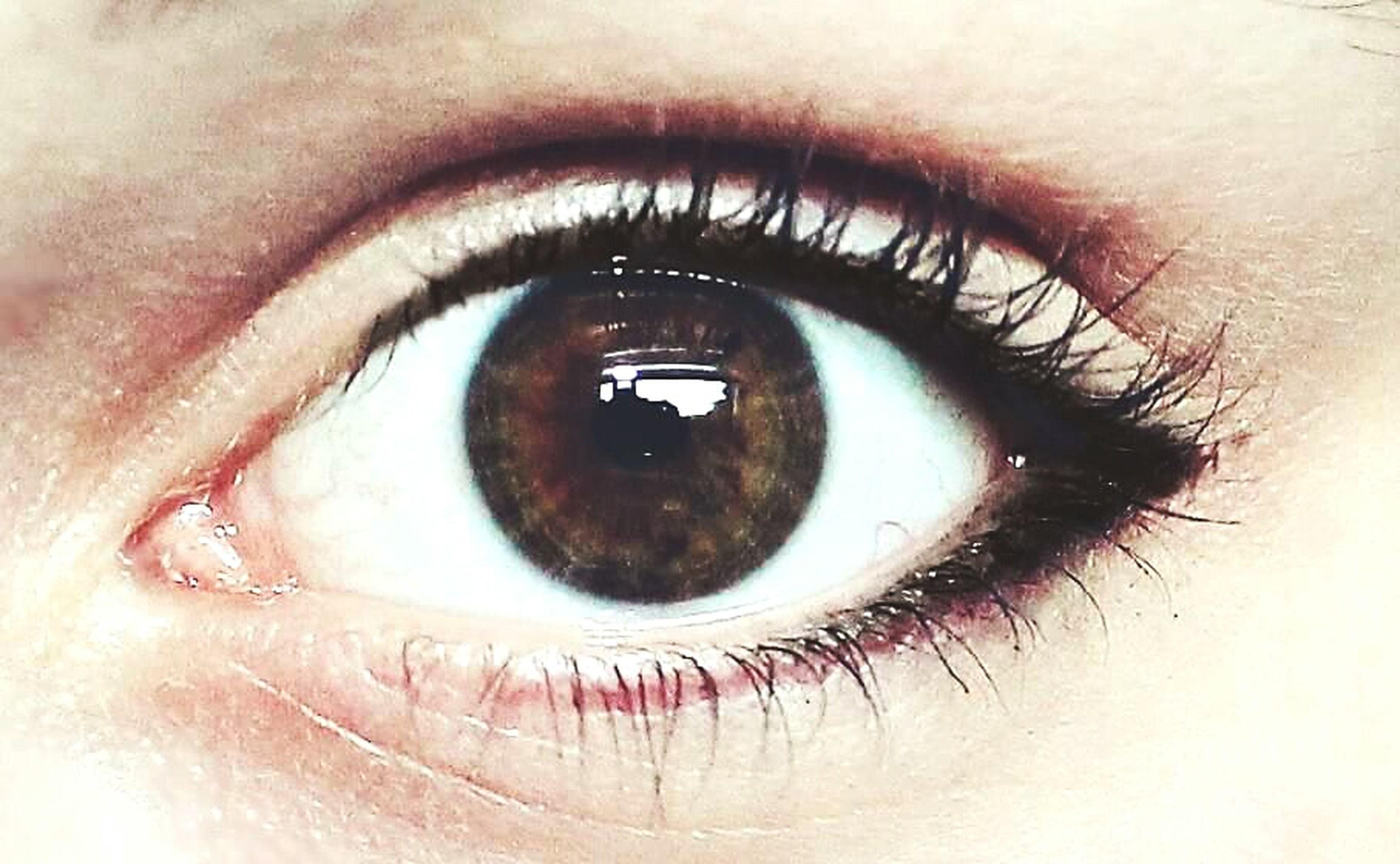 human eye, eyelash, eyesight, close-up, sensory perception, looking at camera, eyeball, portrait, iris - eye, part of, extreme close-up, human skin, lifestyles, human face, eyebrow, extreme close up, vision