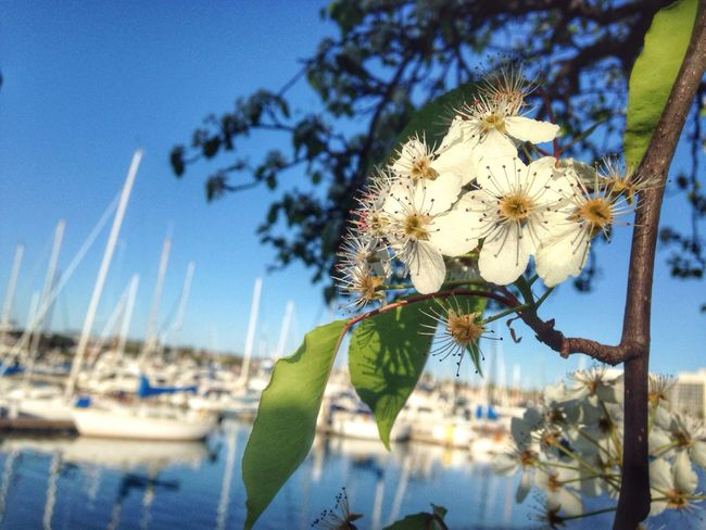 Bloom Nature Beautiful Life Is A Beach Enjoying Life Sandiego Flowers EyeEm Best Shots