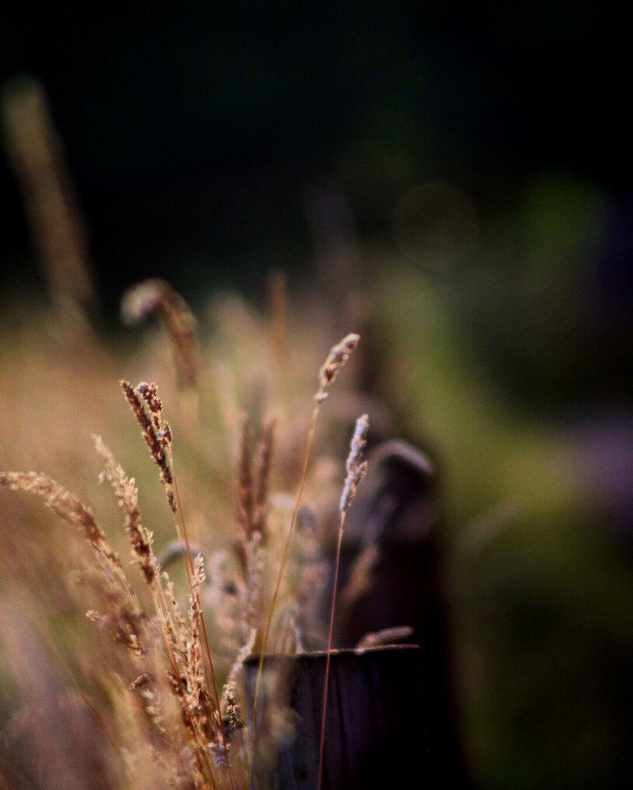 Nature Grass Field Golden Countryside Nikon