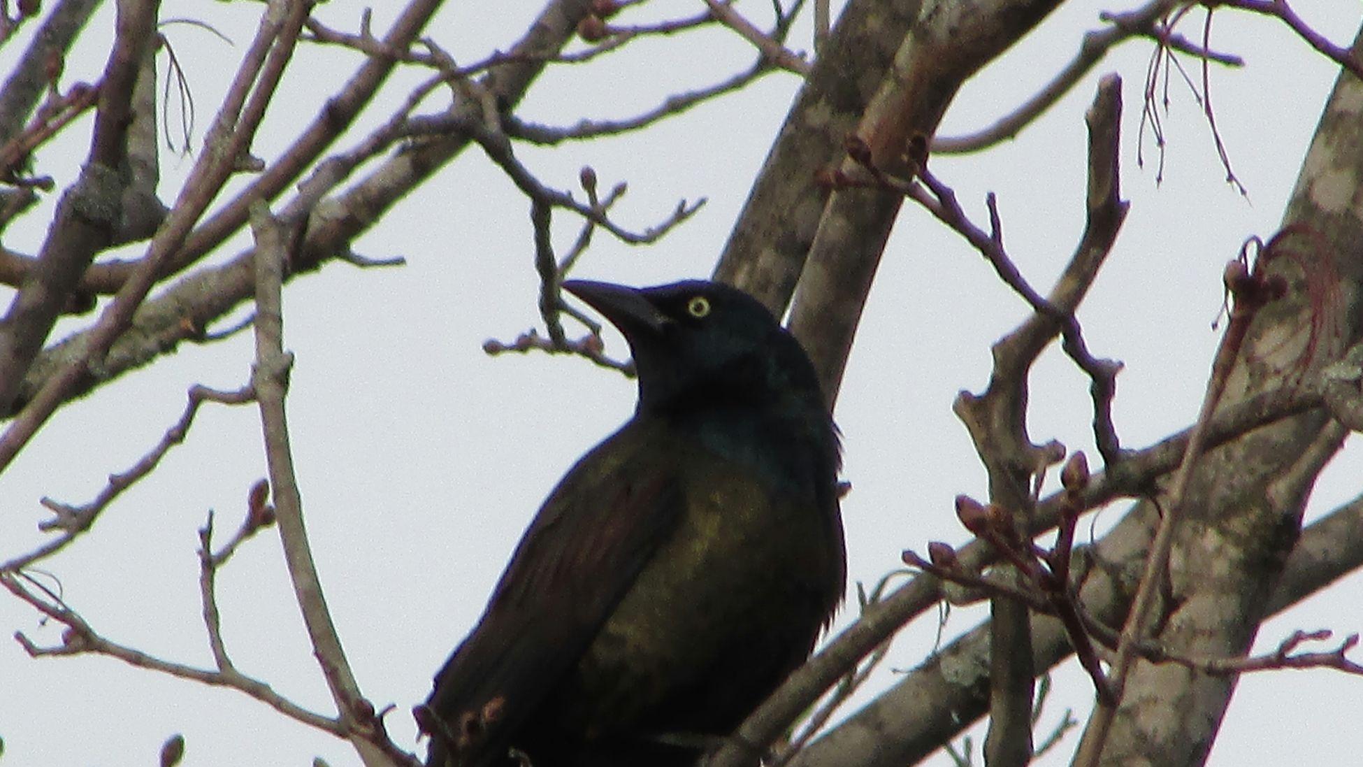 Bird Photography Eye On YouPure Michigan Alittle Creepy