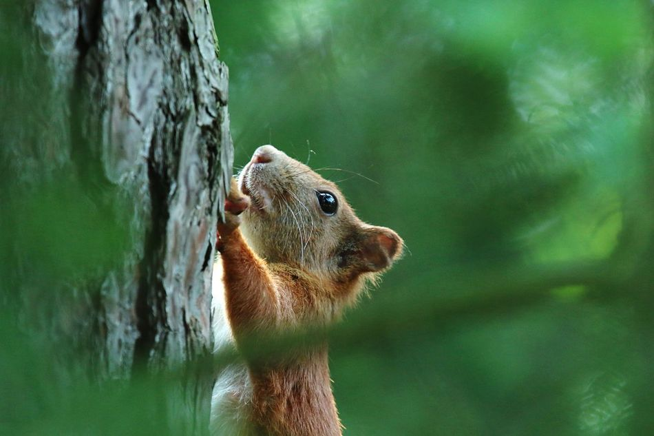 Beautiful stock photos of squirrel, Animal Themes, Animals In The Wild, Climbing, Day