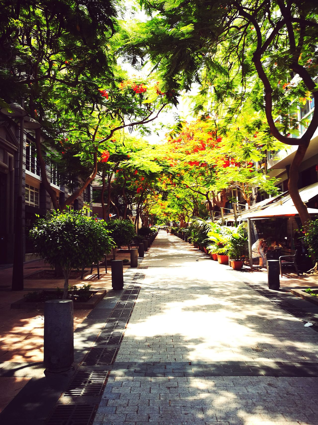 Beautiful Beautifulstreet Street Nature Trees Flowers Greenstreet Santacruzdetenerife Santa Cruz Tenerife Colour Of Life Color Palette Streetphotography