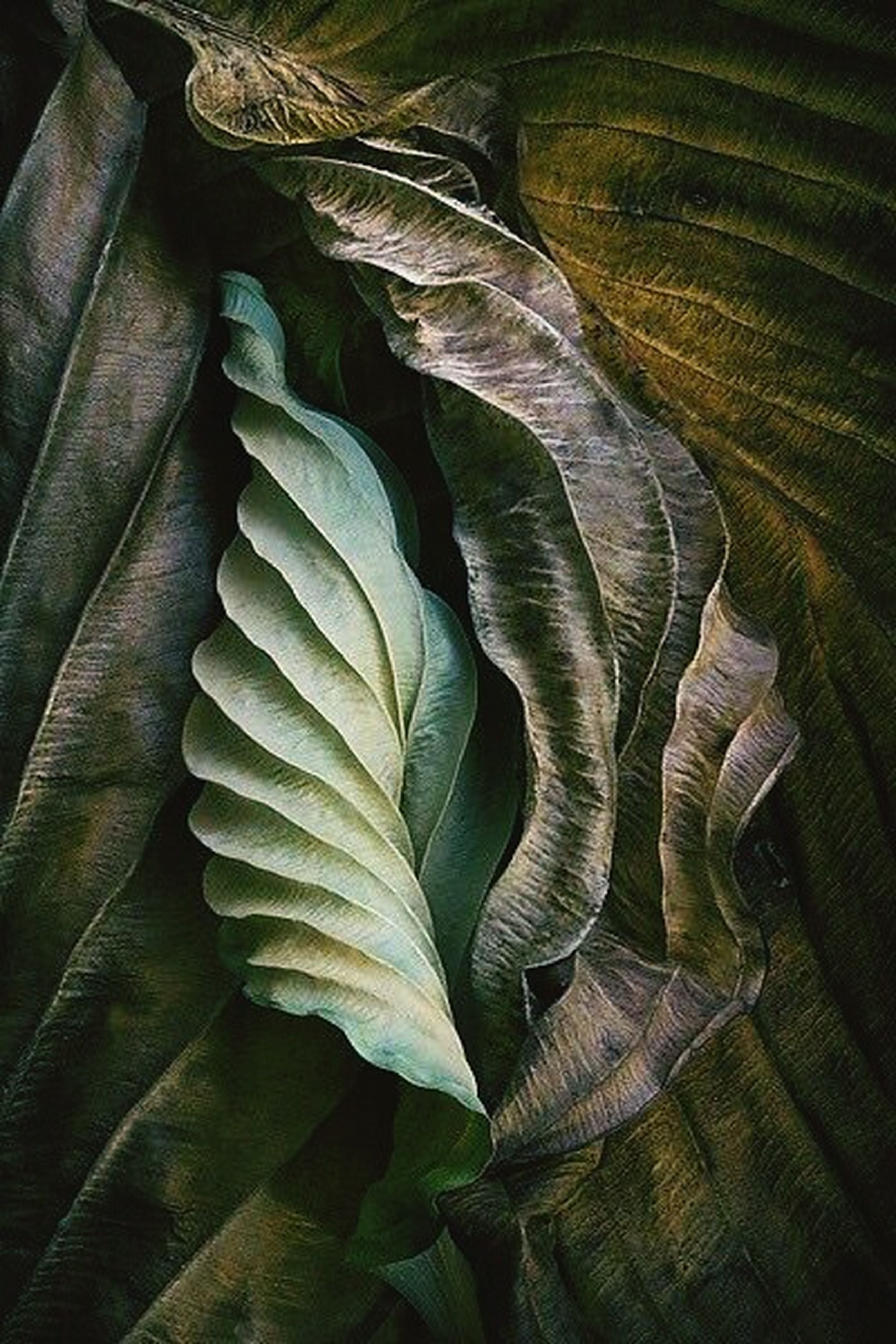 leaf, backgrounds, no people, nature, growth, beauty in nature, day, food, outdoors, close-up, freshness