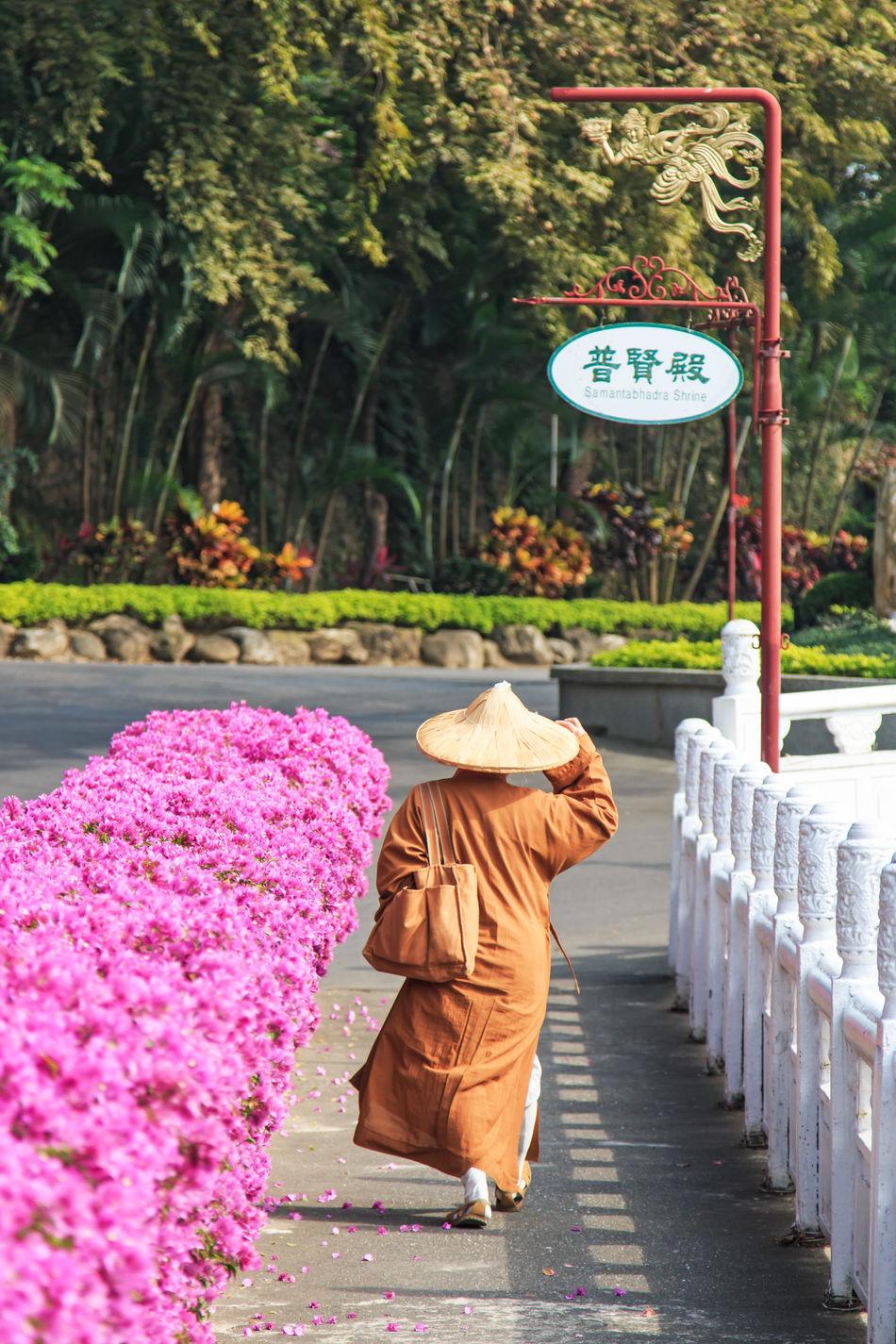 Beautiful stock photos of pflanzen, Brown, Buddhism, Communication, Day