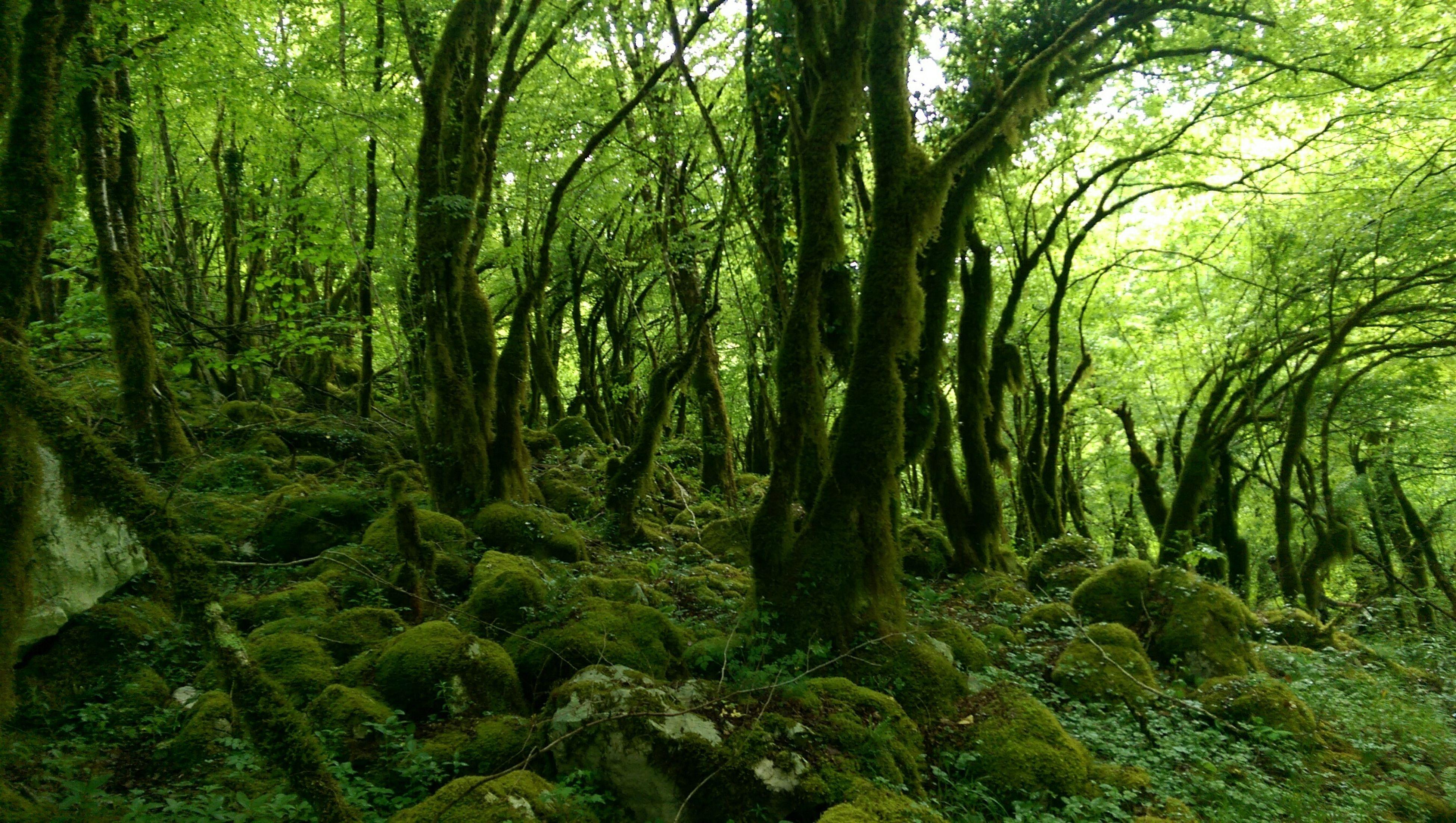Wonderful Piece on Earth Beautiful Nature Secret Garden
