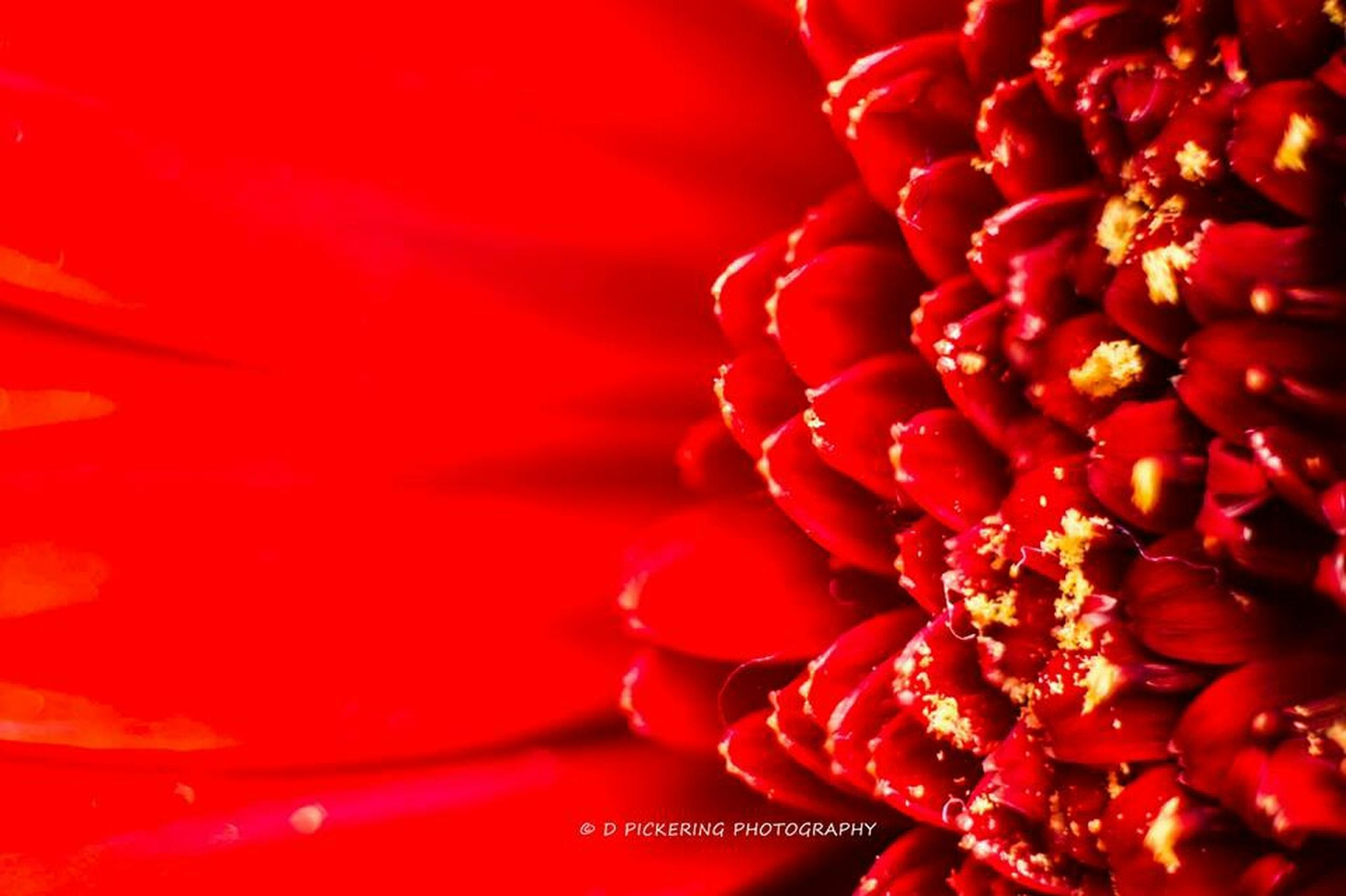 Flowers Macro Red Photography Art In The Garden Nature_collection