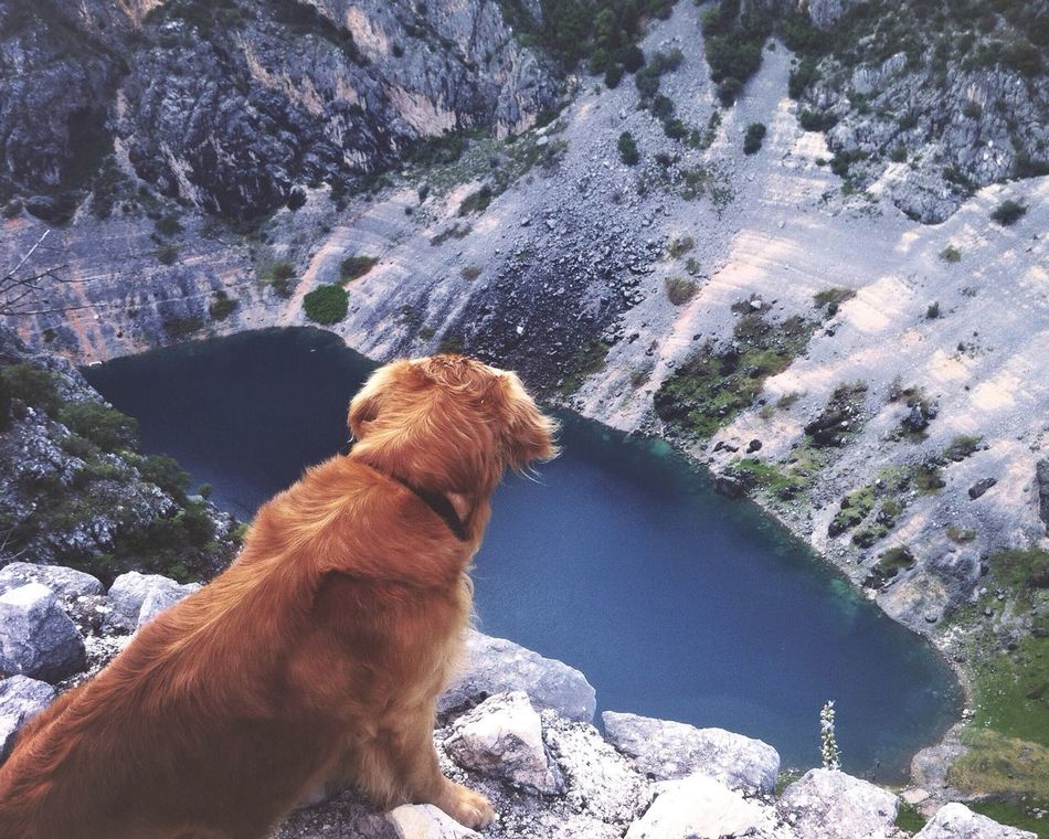 Beautiful stock photos of lake, Animal Themes, Beauty In Nature, Brown, Cliff