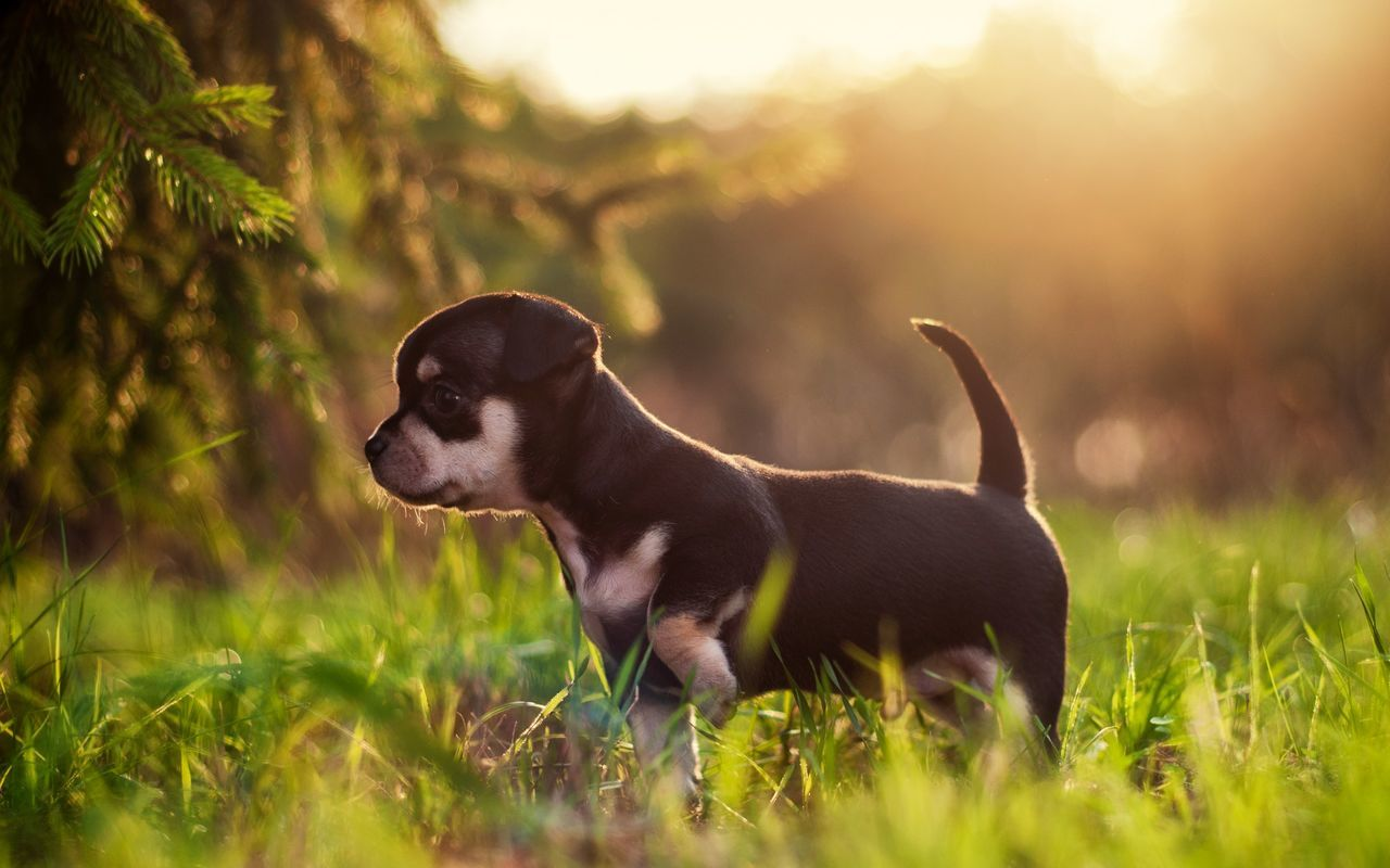 Beautiful stock photos of puppy, Animal Themes, Day, Dog, Domestic Animals