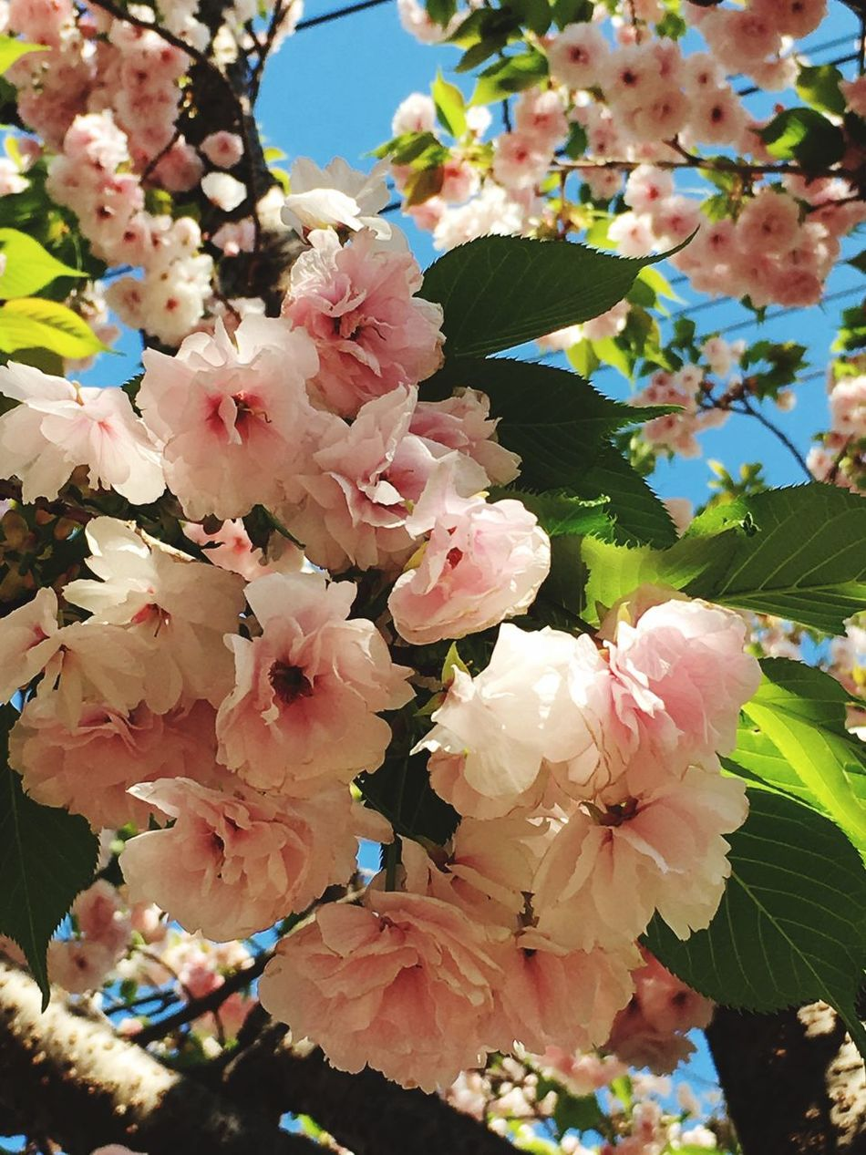 Flower Beauty In Nature Fragility Blossom Petal Nature Growth Freshness Pink Color Springtime No People Flower Head Branch Botany Apple Blossom Blooming Day Outdoors Close-up Leaf