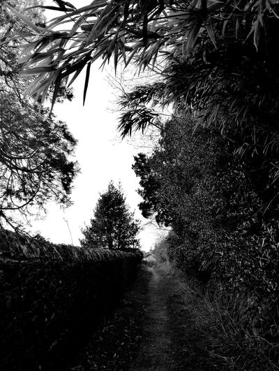 Secret Places Nature Trees Plants 🌱 Pathway Curiosity Wall Walking Around Mysterious Place Cumbia Huawei P9 Leica Black & White EyeEmNewHere BYOPaper!