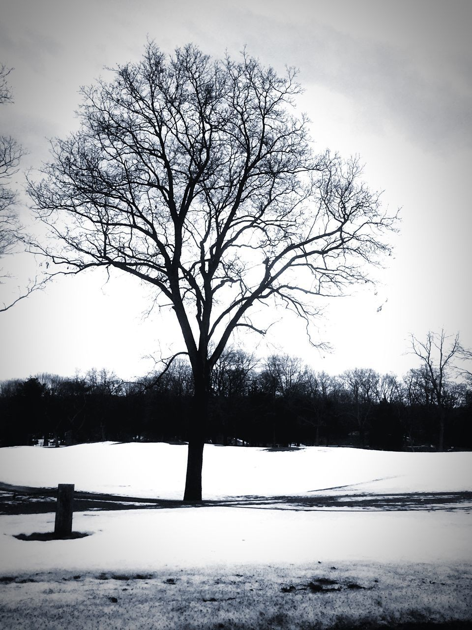 winter, snow, cold temperature, bare tree, tree, nature, weather, tranquility, beauty in nature, cold, tranquil scene, landscape, scenics, branch, outdoors, sky, no people, frozen, day, bleak