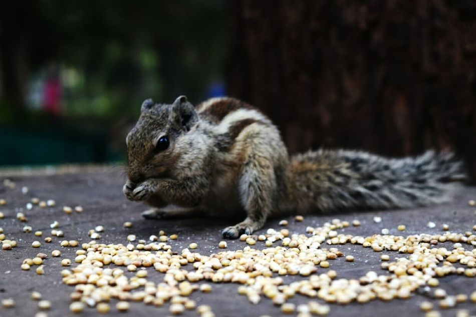 Hello World Check This Out MyPhotography Cutesquirrel Bestclick