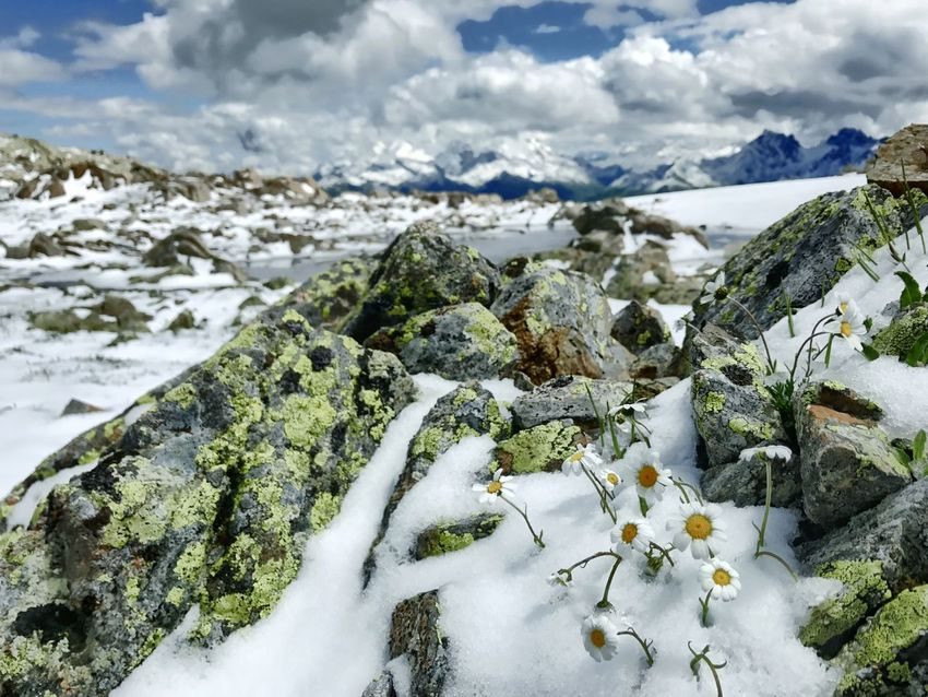 Mountain Snow Mountain Top Flower Alps Rhonealpes Winter Cold Temperature Nature Tranquility Weather Beauty In Nature Tranquil Scene Scenics Frozen Outdoors Cold Rock - Object No People Cloud - Sky Landscape Day Sky