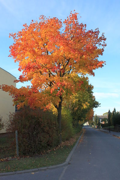 Autumn colours Autumn Beauty In Nature Change Day Growth Horizontal Nature No People Outdoors Road Sky Tree