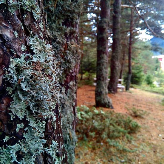Ofcourse Human Lost Yol Ağaçtan Yolunu Bulan A Girl Who Discoverearth Lost In The Moment Tree Trees Trees Collection Nerede Nereden Bolu  Gerede Ovacık Köyü