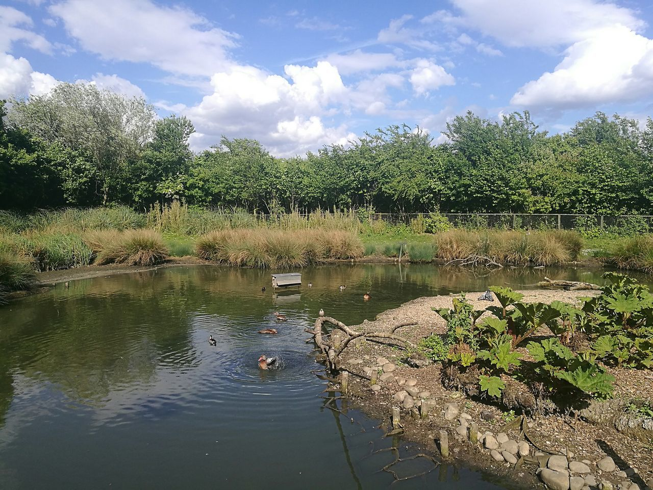 Sunny Day Outdoors Nature Water Cloud - Sky Landscape Wetland Wetland Centre London Nature Reserve WetlandsWildLife Wetland Birds Ducks Day Sky Lake Pond Reflection Smartphonephotography Sunny Tranquility Scenics Scenery Springtime Rippled Water