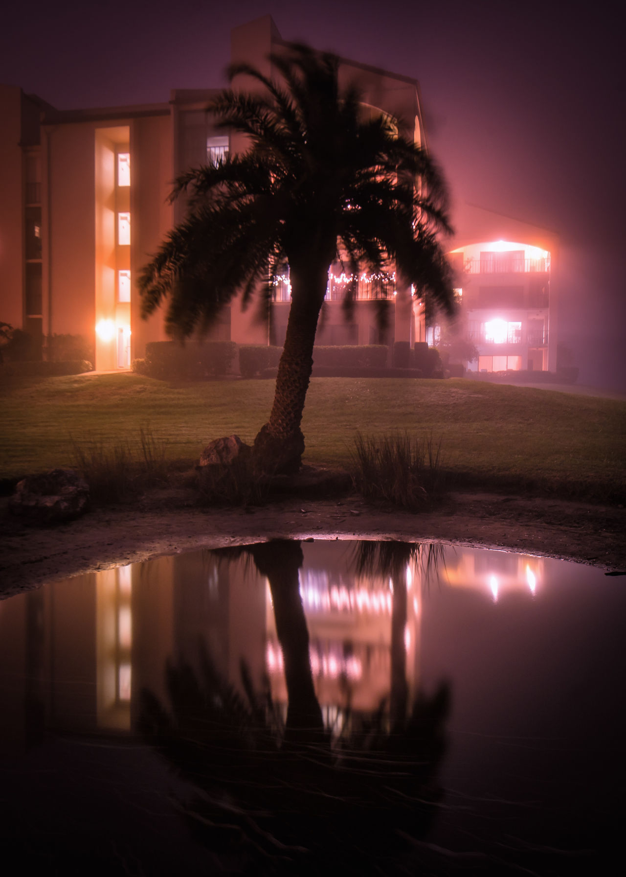 Atmospheric Mood Building Exterior Illuminated Nature Night No People Outdoors Palm Tree Reflection Silhouette Sky Sunset Swimming Pool Tranquil Scene Tranquility Tree Water 3XSPUnity