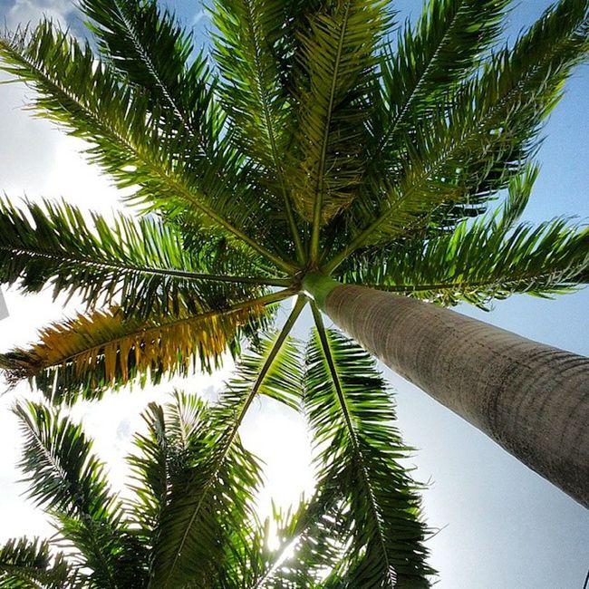 Na sombra das palmeiras