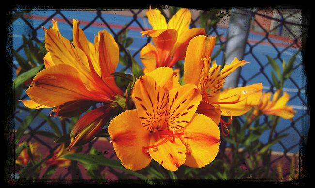 Hello World Enjoying Life Flowers Taking Photos