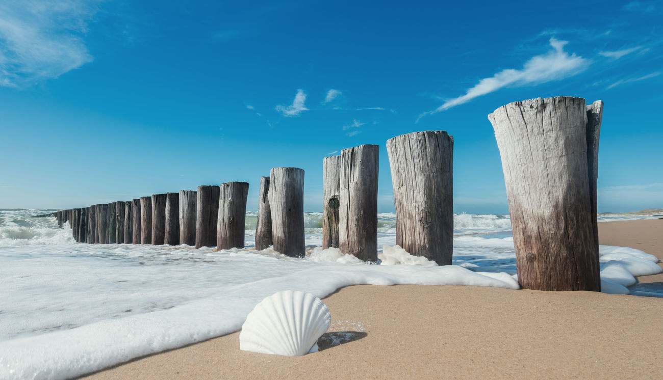 Seashell at the beach Groyne Beach Beauty In Nature Blue Blue Sky Breakwater Day Froth Hollidays Nature Netherlands No People Ocean Outdoors Sand Sea Seashell Shell Sky Summer Sunlight Travel Travel Destinations Water Waves