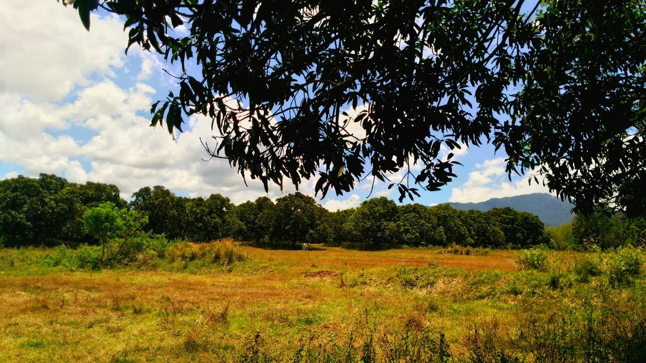 tree, growth, nature, flora, landscape, branch, sky, holiday, beauty in nature, no people, outdoors, day