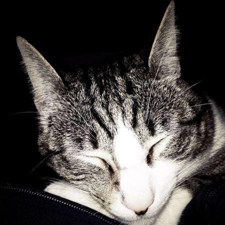 Taking Photos Photography Catlovers Cats Gatosfelizes