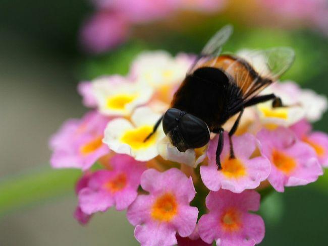 In The Park Macro Macro Photography EyeEm Nature Lover Insect Nature Taking Photos Walking Around Relaxing Bee ここでも地味に働いてました。