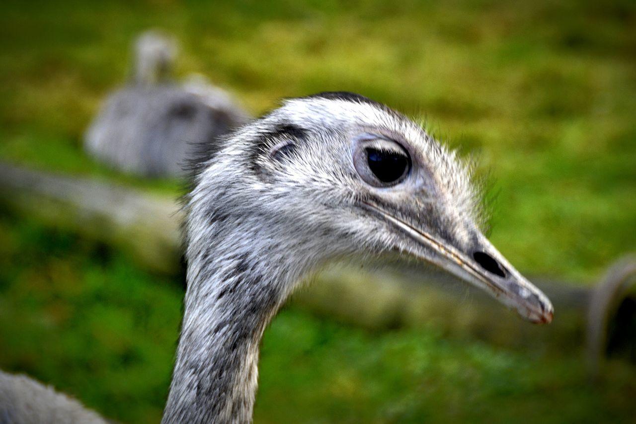 one animal, animal themes, animals in the wild, animal wildlife, focus on foreground, bird, no people, day, outdoors, close-up, nature, beak, mammal, grass