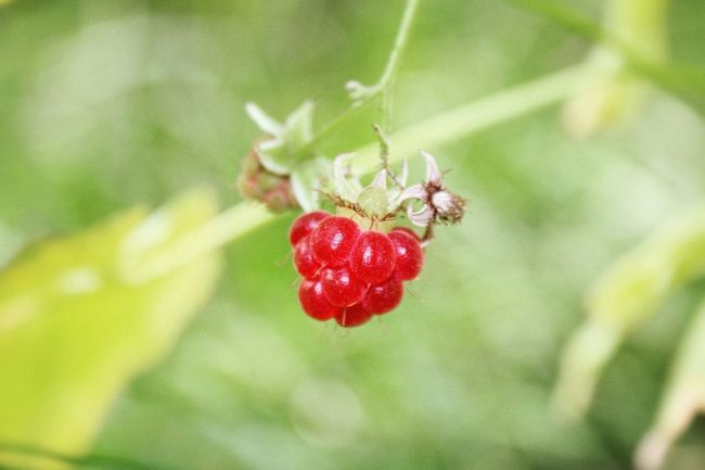Berry Red Fruit Berrys Yummy Nature Food