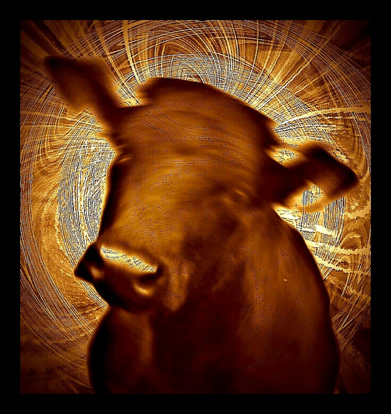 Check This Out My Moo For Moovember Feeling Inspired Portrait Of A Cow Portrait Of A Friend No Edit No Fun Creative Power Present For My Special Friend Humor My Mo For Movember Showcase: November