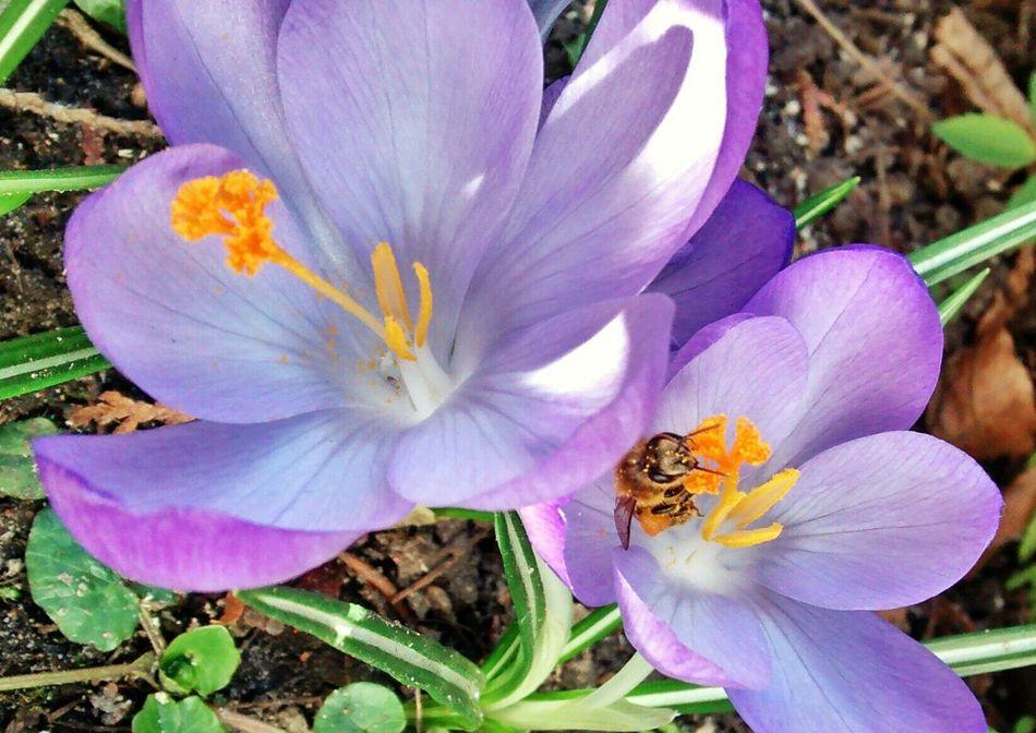 Die Bienen haben das Wetter auch genutzt. Bees Imkerei Beekeeping Hive
