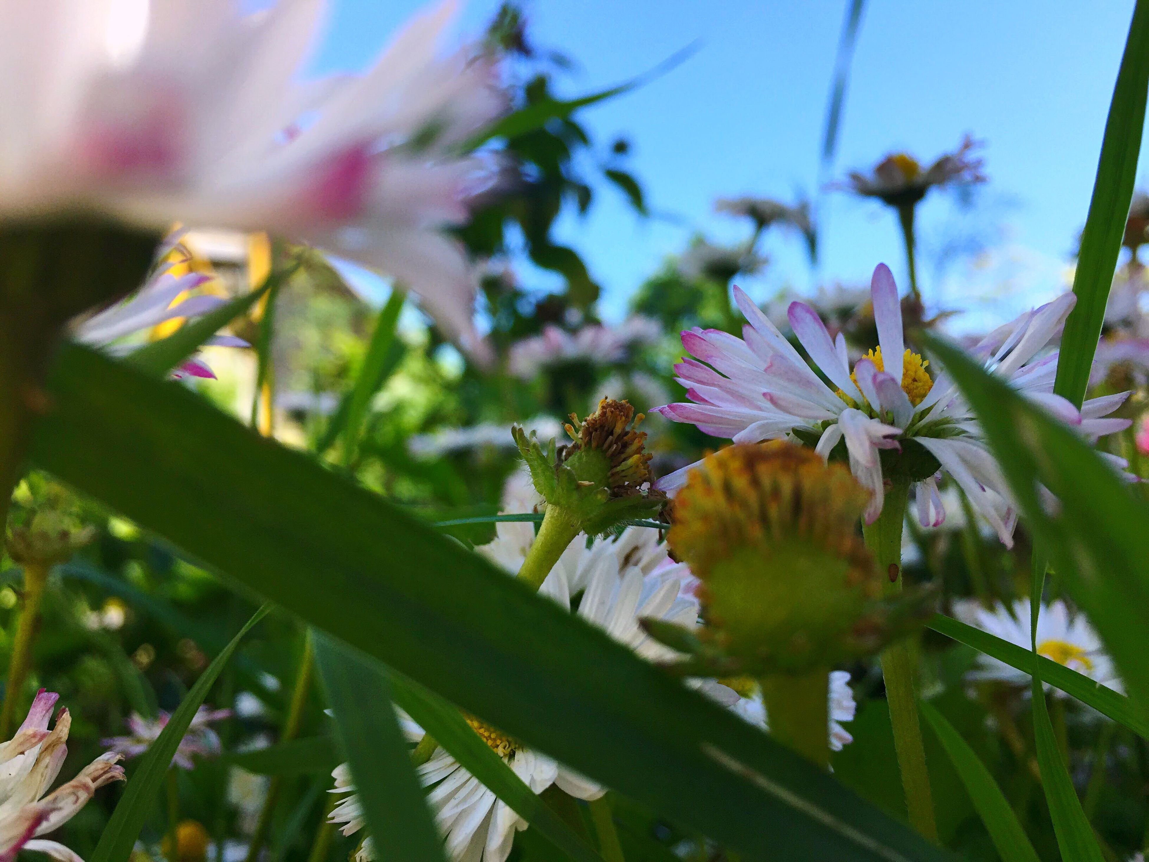 flower, growth, freshness, fragility, one animal, focus on foreground, plant, petal, beauty in nature, close-up, insect, nature, flower head, animal themes, animals in the wild, leaf, wildlife, blooming, low angle view, day