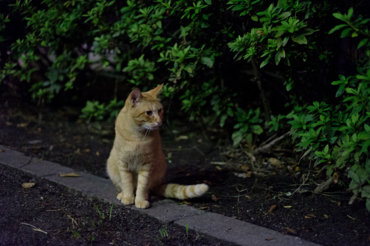 one animal, mammal, animal themes, animals in the wild, plant, outdoors, feline, no people, animal wildlife, day, nature, sitting