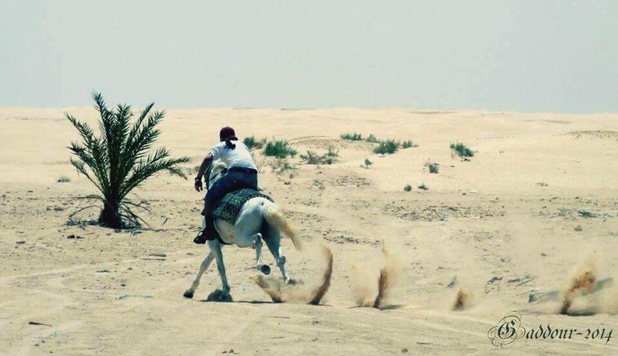 Tunisia Riding Horse Enjoying Life