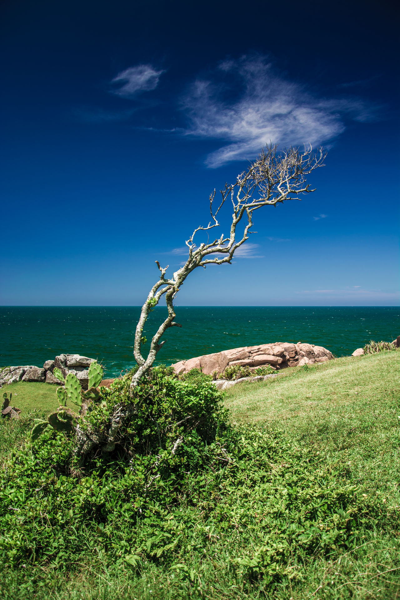 Beach Beauty In Nature Blue Day Grass Growth Horizon Over Water Landscape Nature No People Outdoors Plant Rock - Object Scenics Sea Sky Tranquil Scene Tranquility Tree Water