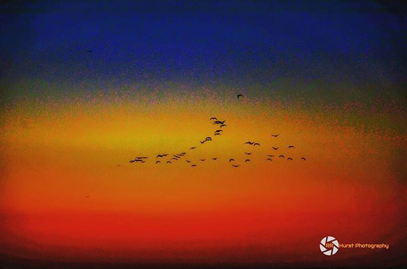 Beautiful sunrise this morning as the birds head toward the warm sun. @outdoorphotomag @photographymagazine @PhotographyWeek @photonewscanada Lakeontario  Lakefront Water Birds Burlingtonontario Burlingtonpier Calmwaters Colourful Beautiful Blueskies Orangesky Spring Ig_sunrisesunset Southernontariophotographer Lovephotography  Earlymorning  Nikonphotographers Nikonphotography Prophotographer Nikond7000 Rrhurstphotography Artsburlington Latowphotographersguild
