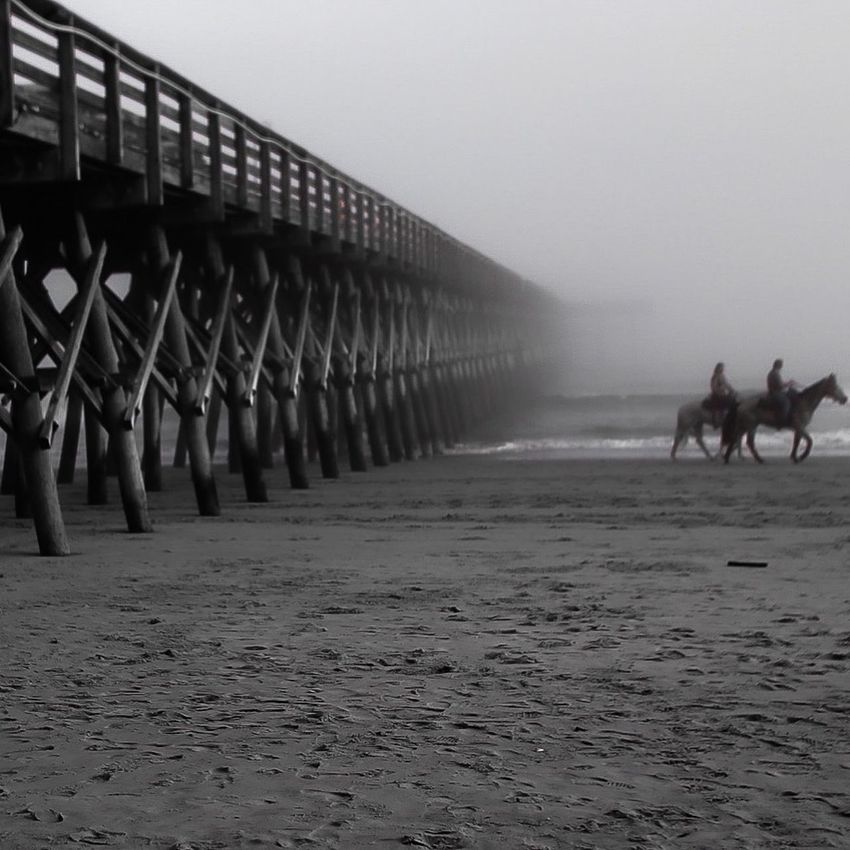 Myrtle Beach SC Horses Beach Pier Black And White Horse Back Riding Horse Riding Horse Photography  Horse