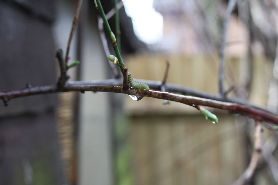 Branch Catepillar Catepillars On The Tree Close-up Differential Focus Focus On Foreground Fragility Garden Photography Green Color Nature Nature Garden No People Selective Focus Zoology
