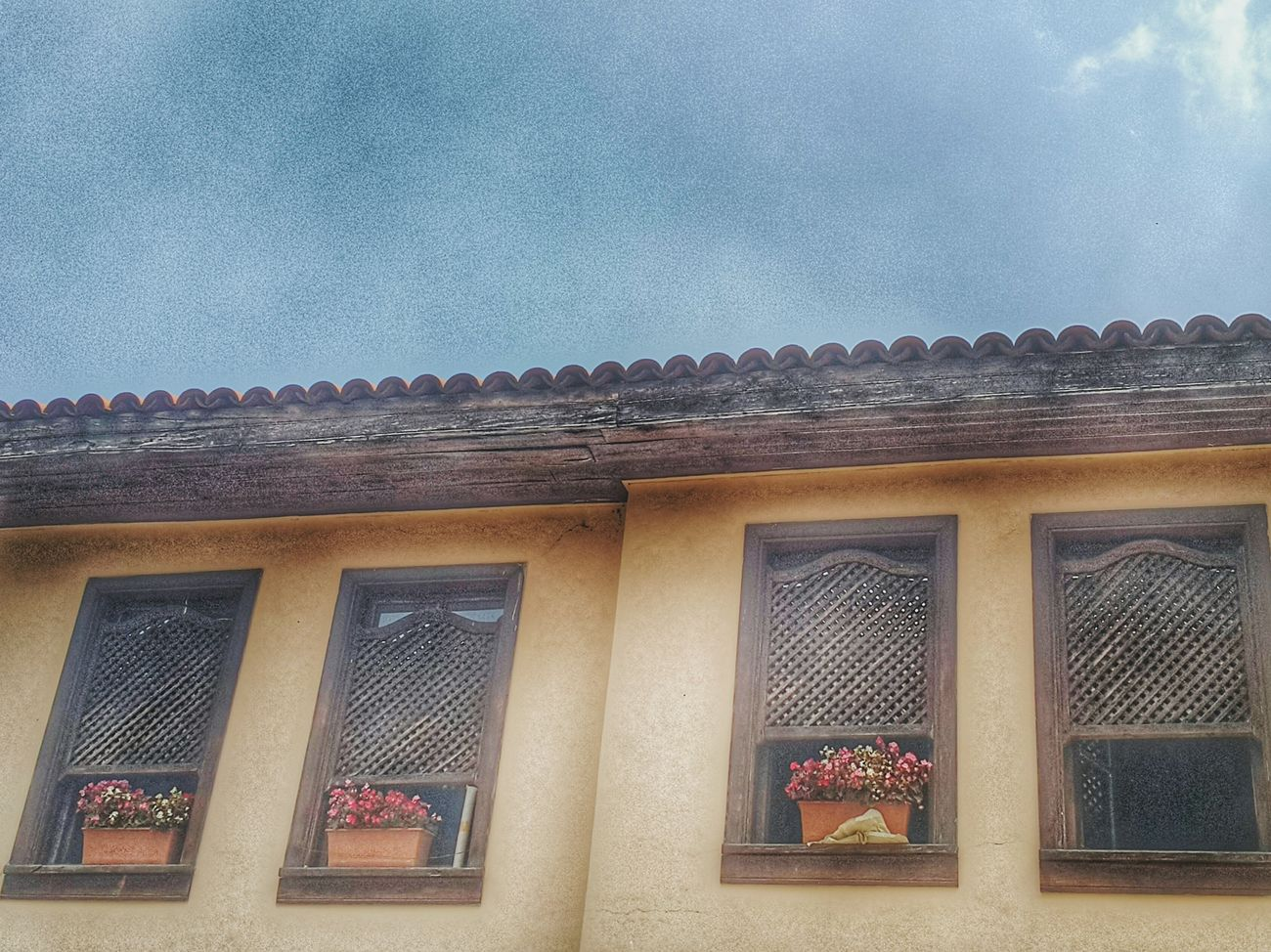 Pencere Flower Flowers Ahşap