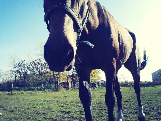 a bit swagyolo he didn't want to show his face:d Horse Lovelovelove Tagsforlikes Likeforlike