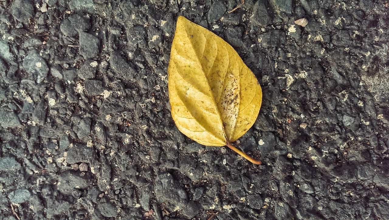 High Angle View Of Yellow Leaf On Street
