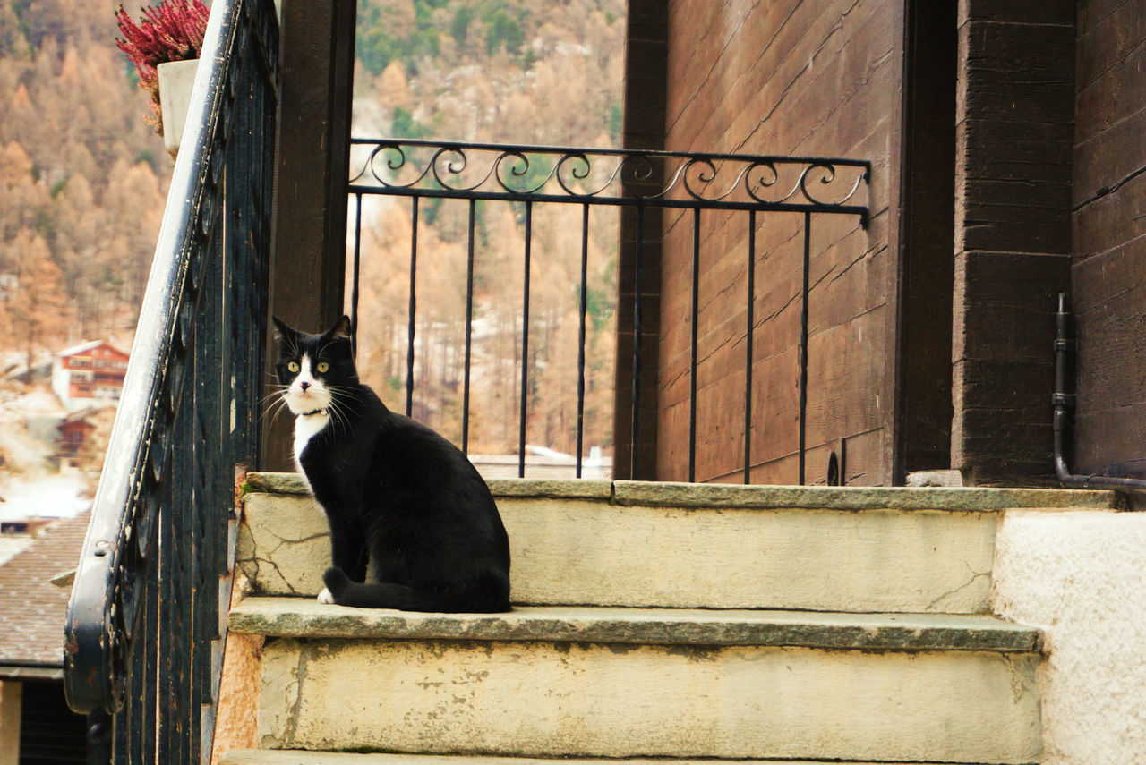 one animal, animal themes, day, no people, domestic cat, outdoors, building exterior, built structure, mammal, pets, architecture, sitting, domestic animals, retaining wall, full length, close-up