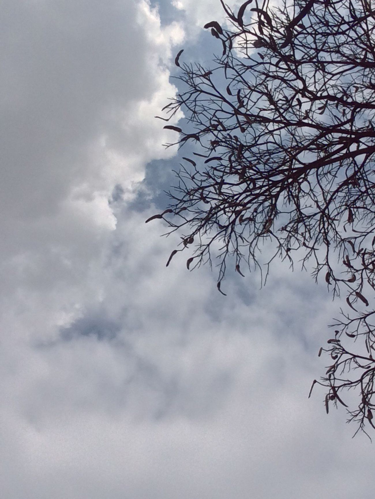 Cloud - Sky Sky Low Angle View Tree Nature No People Bare Tree Beauty In Nature Branch Outdoors Tranquility Day Nature IPhoneography Tree Iphonephotography مصر شجر Thisisegypt Livelovecairo Liveloveegypt Cloud Clouds And Sky Winter Clouds